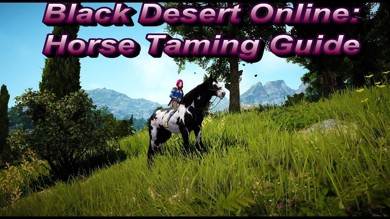 black desert online tamer guide