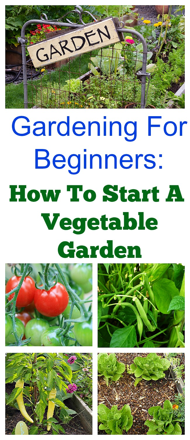 beginners guide to gardening vegetables