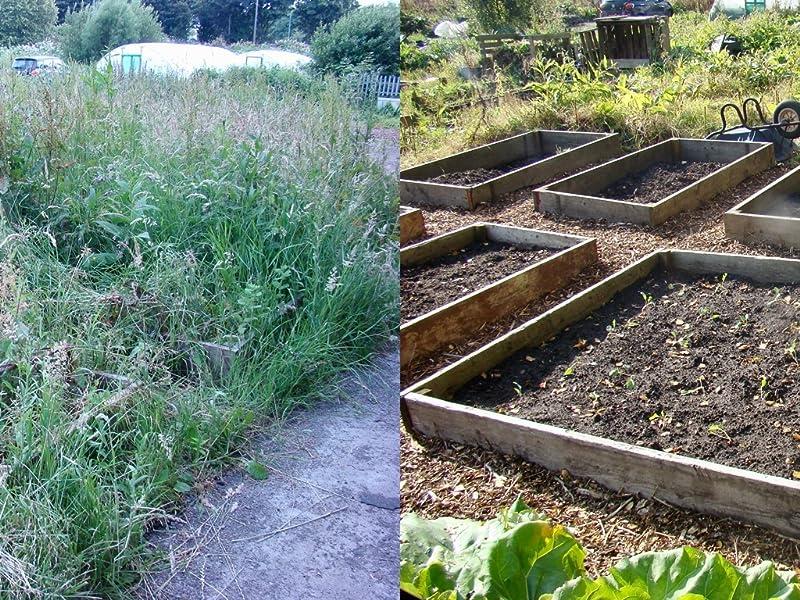 beginners guide to gardening vegetables