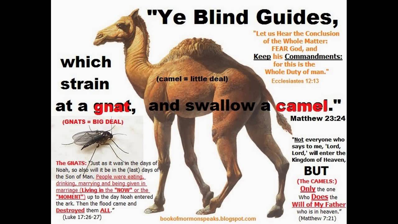 what blind guides swallow after straining gnats