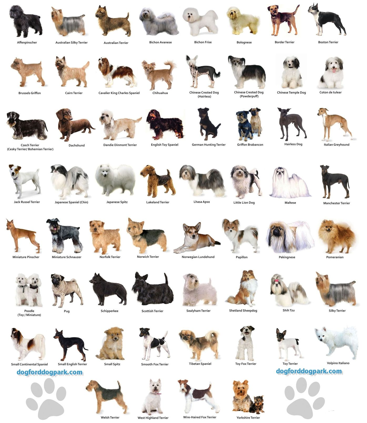 different types of guide dogs